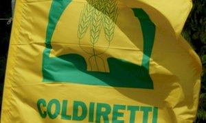 Festa della donna, Coldiretti Cuneo: ''La Pandemia non ferma le imprese rosa''