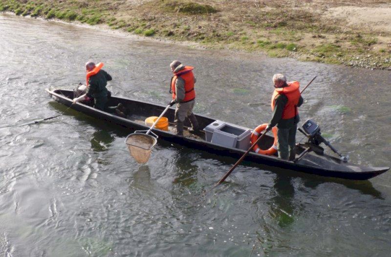 Il Parco del Monviso collabora al monitoraggio del temolo adriatico