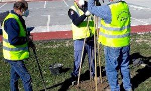 Beinette, piantate 130 piantine di Paulownia per contrastare l'inquinamento