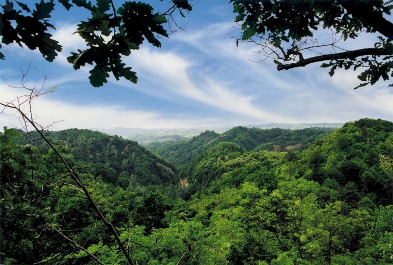 """Giornata internazionale delle foreste: sul canale della Regione il documentario """"La via del bosco"""""""