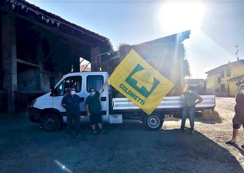 """Coldiretti Piemonte: """"Circhi in piazza in alcune parti d'Italia, è sos per gli animali 'disoccupati'"""""""