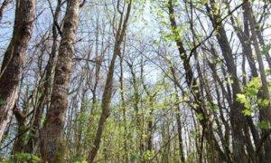 Trasformazione del bosco: la Regione abbassa l'importo base per il calcolo della compensazione