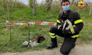 Bagnolo Piemonte, i pompieri salvano un cagnolino incastrato in una tubatura