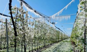 La Regione Piemonte chiede al Ministero risorse per la compensazione dei danni provocati dalle gelate