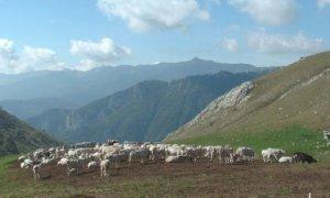 Agricoltura di montagna: al via il bando regionale per le indennità compensative