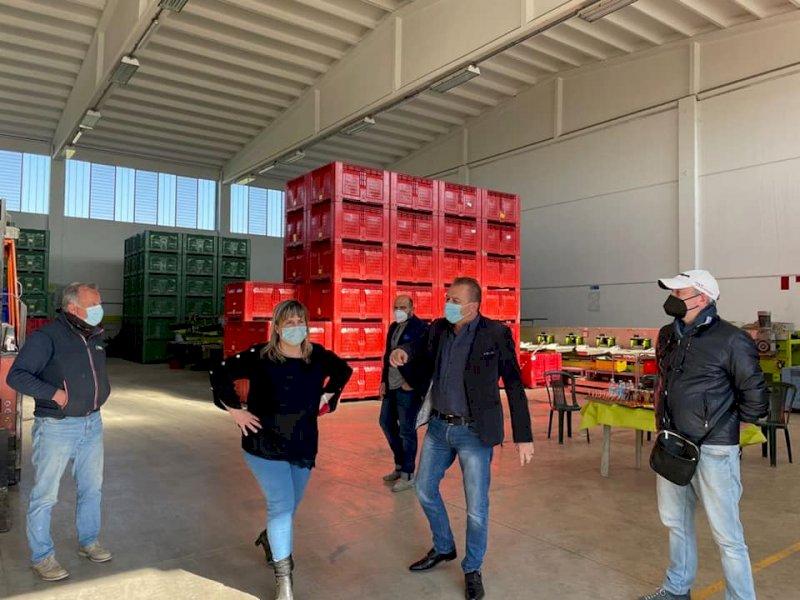 """Gelata nei frutteti del Saluzzese, Bongioanni (FdI): """"Garantire almeno il 40 per cento delle perdite"""""""