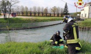 Il capriolo è bloccato in un canale, lo aiutano i vigili del fuoco