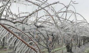 Anche Costigliole conta i danni delle gelate: convocata la Commissione Agricoltura