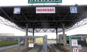 Cuneo, al Miac prosegue il regolare svolgimento del mercato bovino