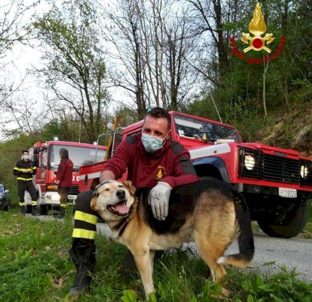 Il cane sale su un albero per inseguire un gatto e non riesce a scendere: soccorso dai pompieri