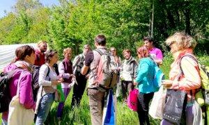 Cervasca, in programma domenica un'escursione botanica a Prato Gaudino