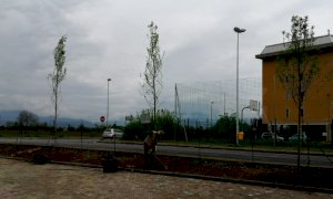 Confreria, l'area attrezzata ha di nuovo i suoi alberi intorno