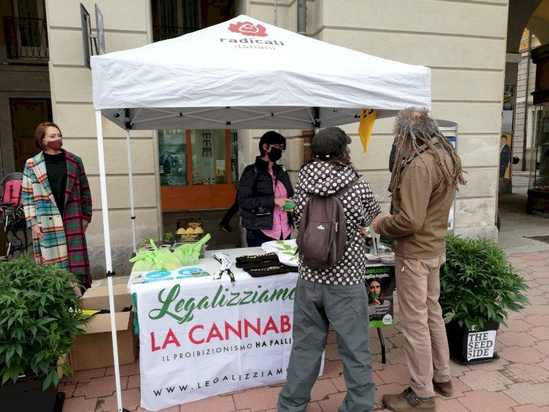 Cannabis terapeutica, i Radicali distribuiscono semi di marijuana davanti al tribunale