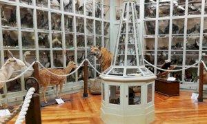 Bra, con il ritorno in zona gialla i musei riaprono i battenti