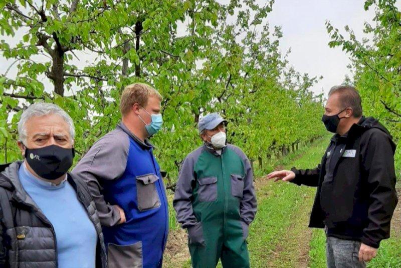 """Il gelo annienta le piante da frutto, Bongioanni: """"Attivare subito il sostegno agli imprenditori agricoli"""""""