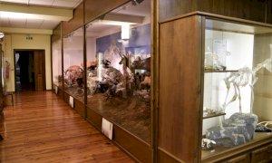 Il Parco del Monviso riapre il Museo naturalistico del fiume Po a Revello