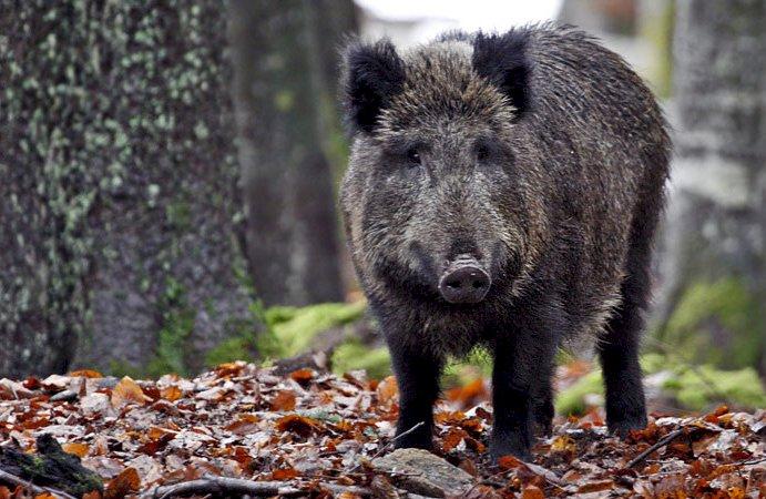 """Fauna selvatica, Coldiretti Cuneo: """"Più di 100 sindaci si sono già attivati per fermare l'emergenza"""""""