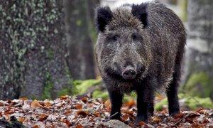 Fauna selvatica, Coldiretti Cuneo: