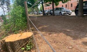 Tarlo asiatico, verranno abbattuti quaranta alberi lungo corso Kennedy