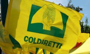 DL Sostegni bis, Coldiretti Cuneo: