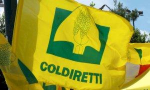 PAC, Coldiretti Cuneo: