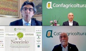 Innovazione, ricerca e sostenibilità per la valorizzazione della nocciola piemontese