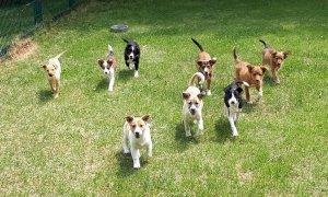 Tutti adottati i sette cuccioli abbandonati in una gabbia a Riforano