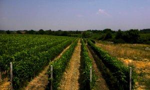 Bando da 1,8 milioni di euro per gli agricoltori aderenti ai regimi di qualità