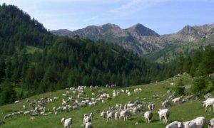 Alpeggio, Coldiretti Cuneo: