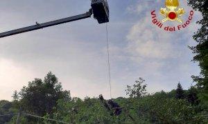 Albero su un cavo telefonico a Valloriate, arrivano i pompieri