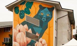 Cuneo, spunta un micio dipinto sulla scuola elementare del San Paolo