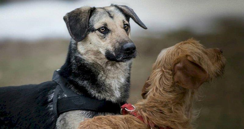 """Canile di Cuneo, Fratelli d'Italia denuncia: """"Numerosi decessi di cuccioli"""". La replica: """"Nessuna anomalia"""""""