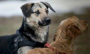 """Canile di Cuneo, Fratelli d'Italia denuncia: """"Numerosi decessi di cuccioli"""". La replica:"""