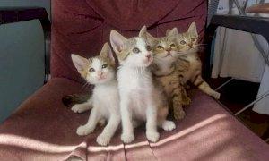 Mamma gatta abbandonata con quattro micini dopo un annuncio: madre e figlia a processo