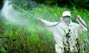 Le colline del Roero libere dai diserbanti chimici?