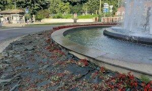 I vandali rovinano la festa dell'Italia a Mondovì: devastate le aiuole alla fontana della Goj