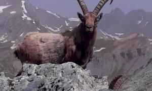 Val Maira, inaugurato un sentiero dedicato a un alpinista ucciso da una valanga