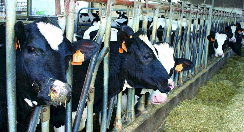 Latte, quali scenari per il comparto? Convegno online di Confagricoltura Cuneo
