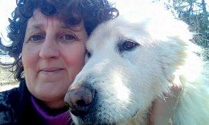 Incornata da un toro, muore una 60enne di Bagnolo Piemonte