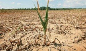 Da Confagricoltura un appello alla Regione Piemonte per scongiurare la siccità