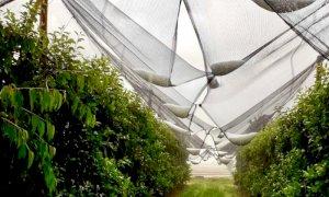 Agricoltura, dalla Regione tre milioni di euro per le reti antigrandine