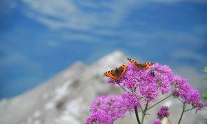 Farfalle del Monviso, una giornata in cui scienza e bellezza si incontrano