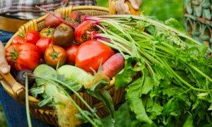 Approvato il decreto contro le speculazioni sul cibo, esulta Coldiretti