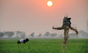 Agricoltura, sono stranieri 8500 degli oltre 12mila braccianti nella Granda