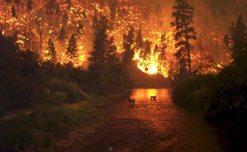 """Incendi, il dossier Uncem sul tavolo del governo: """"Ecco come salvare i nostri boschi"""""""