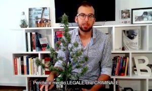 Coltiva in casa una pianta di cannabis per disobbedienza civile, denunciato il segretario dei Radicali Cuneesi