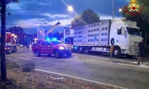 Fossano, camion carico di maiali si rovescia sulla rotonda di via Cuneo