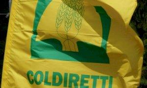 Covid, Coldiretti Cuneo: