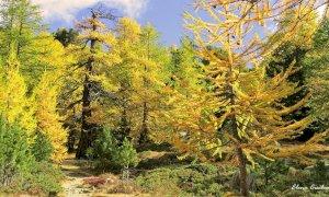 Martedì 28 settembre riapre lo Sportello Forestale del Parco del Monviso