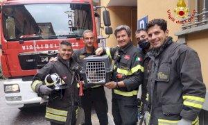 I pompieri di Alba salvano un gattino incastrato nella fessura di un muro